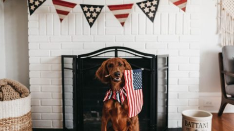red, white, and you photo contest