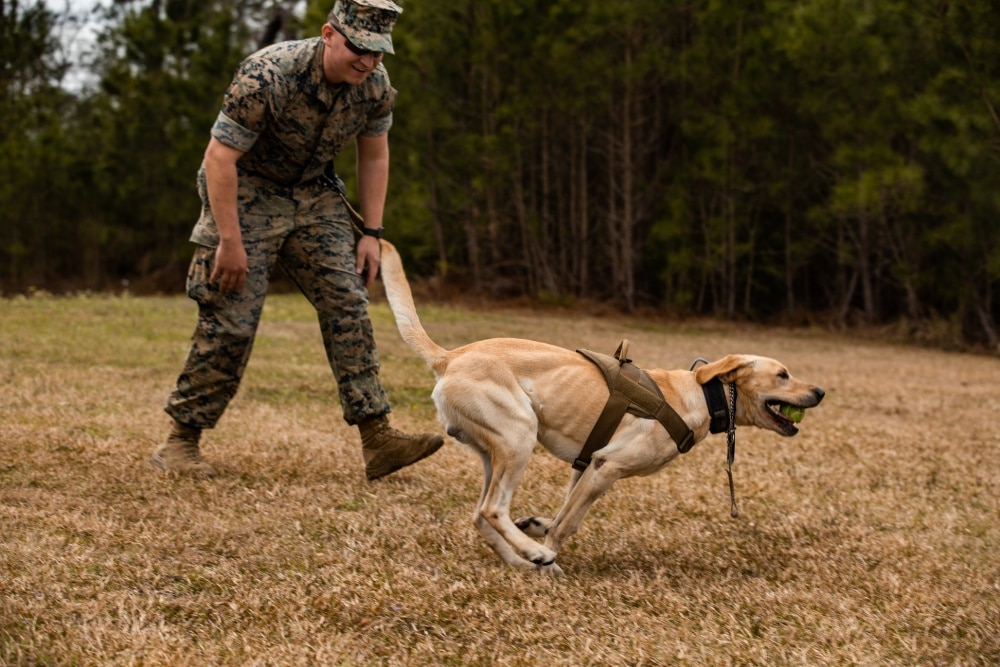 AUGMENTED REALITY MILITARY DOGS